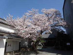 本隆寺1.JPG