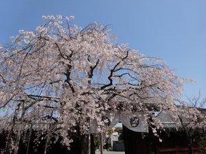 妙覚寺2.JPG