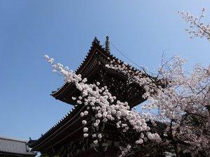 本法寺2.JPG