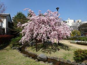 桜井公園2.JPG