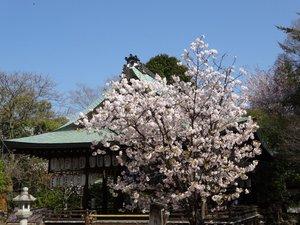 白峰神社.JPG