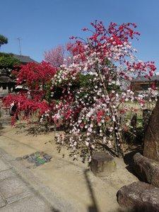 首途八幡宮1.JPG